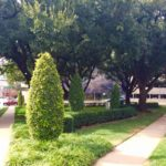 Harry Hines Triangle Park Maintenance Fund